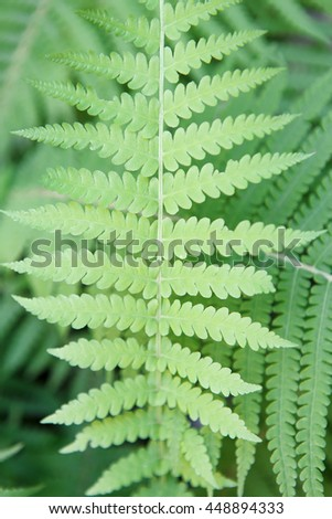 Fresh green fern leaves texture closeup. Natural foliage, botanic background, vertical image - stock photo