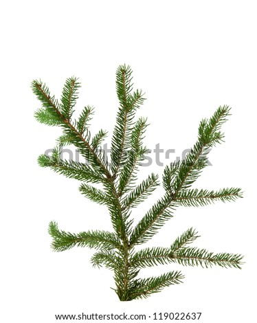 fresh green fir tree branch isolated on white background - stock photo