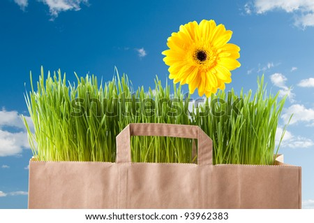 Fresh green grass and bright yellow Gerbera in a paper shopping bag, blue sky background - stock photo