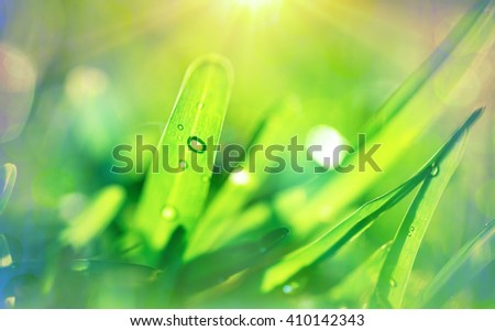 Fresh green grass background, bright spring sunny day, shallow depth of field, abstract natural wallpaper - stock photo