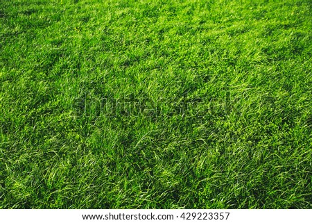 Fresh green grass background. Natural texture of grass. Part of ecological clean area. - stock photo