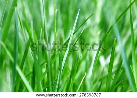 Fresh green grass blurred background - stock photo