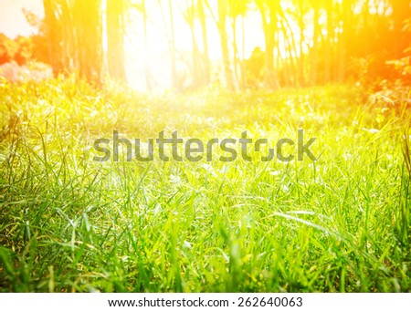 Fresh green grass field with bright sun light, sunny day in spring park, nature background, beautiful sunrise in the forest, selective focus - stock photo