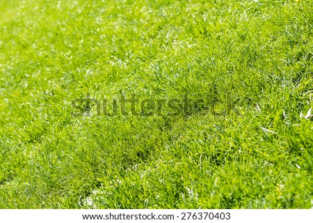 Fresh Green Grass In Spring Close Up - stock photo