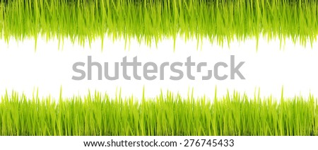 fresh green grass isolated on white. - stock photo