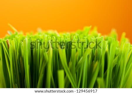 Fresh Green Grass over Orange Background - stock photo
