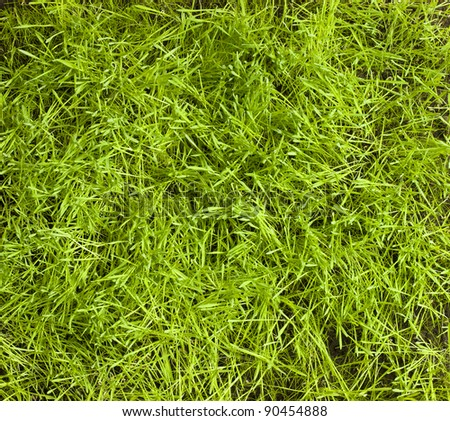 Fresh green grass pattern - stock photo