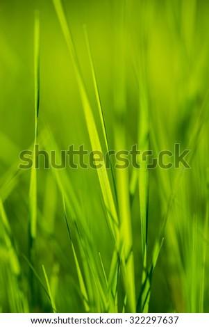 Fresh green grass under the shining sun - stock photo