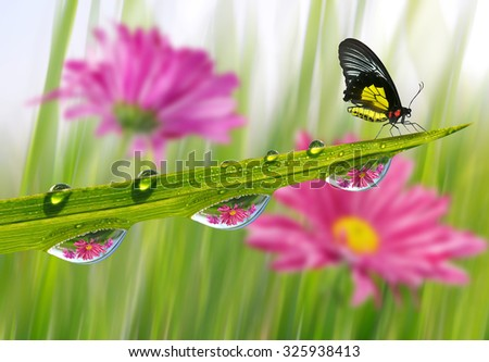 Fresh green grass with dew drops and butterfly closeup. Nature Background - stock photo
