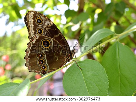 Fresh green grass with dew drops and butterfly. Natural background. - stock photo