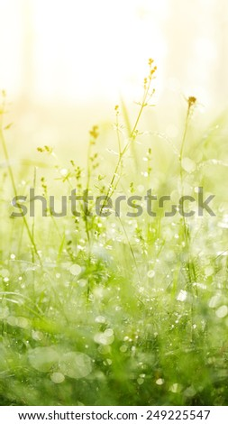 Fresh green grass with dew. Grass background. - stock photo