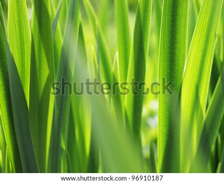 Fresh green grass with water droplet in sunshine - stock photo
