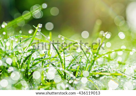 Fresh green grass with water drops. - stock photo