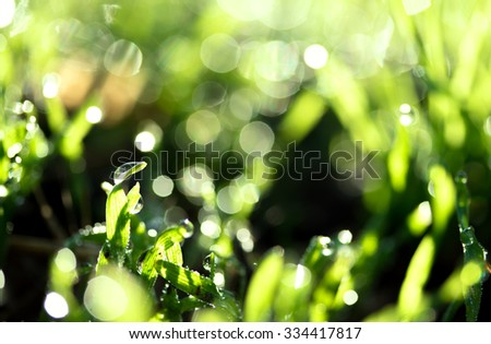 fresh green grass with water drops, blurred bokeh - stock photo