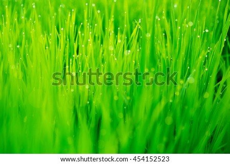 Fresh green grass with water drops close-up. Nature background. - stock photo