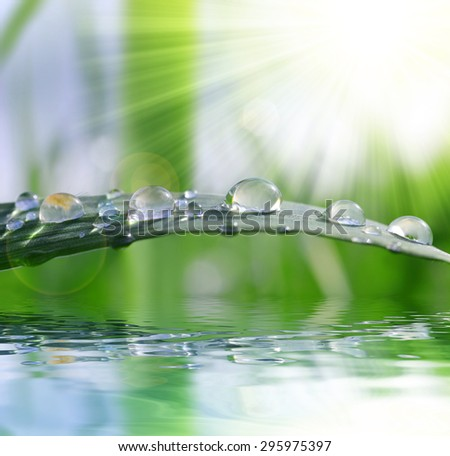 Fresh green grass with water drops closeup. Nature Background - stock photo