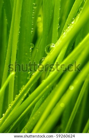 Fresh green grass with water drops on it - stock photo