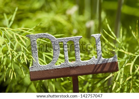 Fresh Green Herbal Dill Leaves in a Garden - stock photo