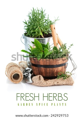 Fresh green herbs with garden tools. Isolated on white background - stock photo