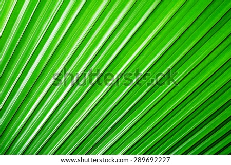 Fresh green leaf, Green leaf background texture, macro - stock photo