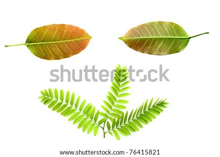 Fresh green leaf isolated on white - stock photo