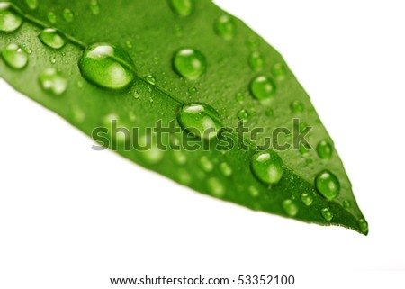 Fresh green leaf isolated on white background - stock photo