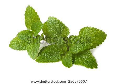 fresh green leaf of melissa isolated on white background - stock photo