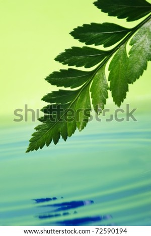 Fresh green leaf reflected in rendered water - stock photo