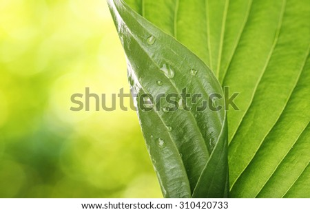 Fresh green leaf with drops close-up - stock photo