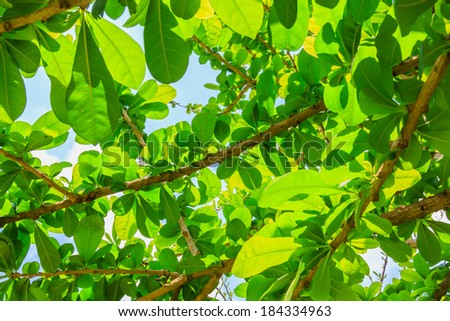 fresh green leaves in the garden - stock photo