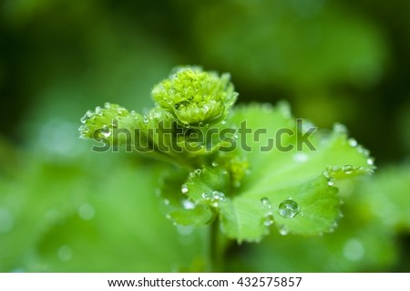 Fresh green leaves in the morning - stock photo