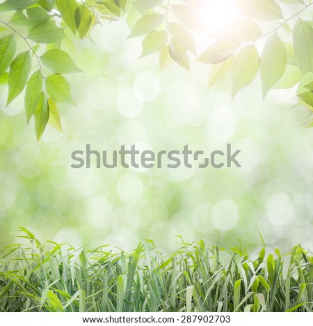 fresh green leaves  ,natural green background with flare - stock photo