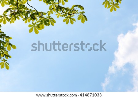 fresh green leaves of a chestnut tree against a blue sky - stock photo