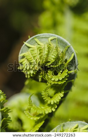 Fresh green leaves of a fern in the blurry background - stock photo