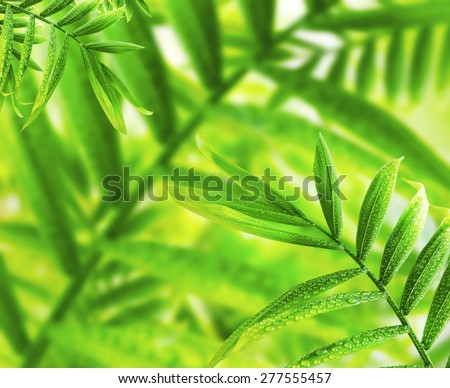 Fresh Green Leaves with Water Drops, Natural Green Leaves Background - stock photo