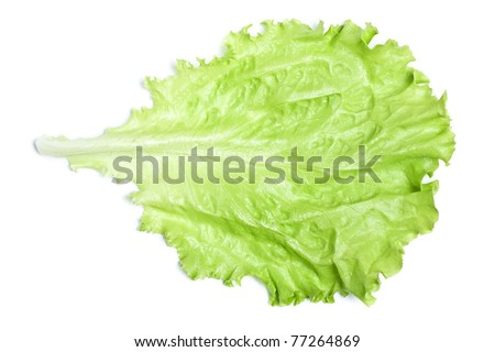 fresh green lettuce leaf isolated on white - stock photo