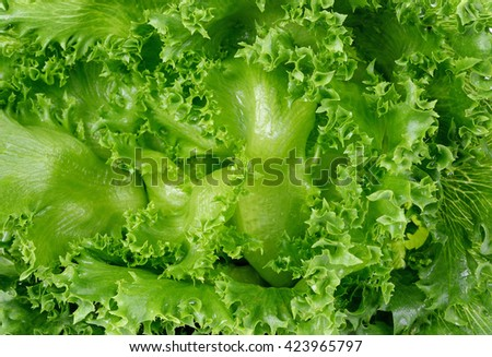 Fresh green lettuce leafs, food background - stock photo