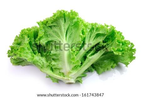 fresh green lettuce leaves isolated on white - stock photo