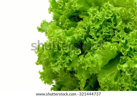 Fresh green lettuce on white - stock photo