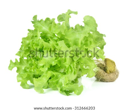 Fresh green lettuce with root isolated on white background. - stock photo