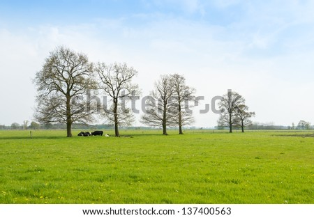 Fresh green meadow in springtime with yellow flowering dandelions and ruminating cows lying under the budding trees. - stock photo