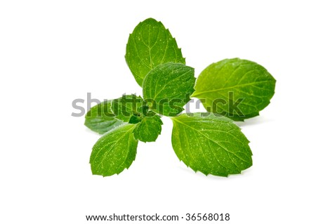 fresh green mint herb isolated on white background - stock photo