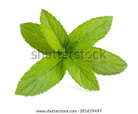 Fresh green mint isolated on white - stock photo