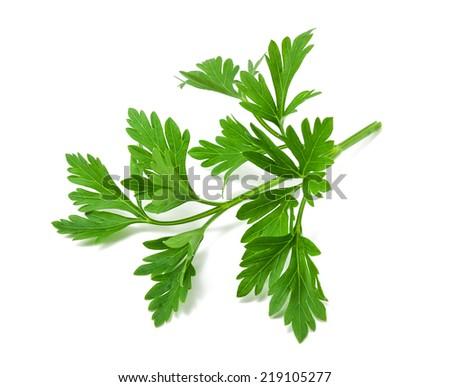 fresh green parsley on white background - stock photo