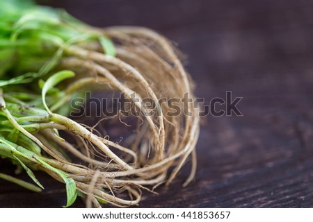 Fresh Green Parsley Roots on Dark Brown Wooden Background, Close-up - stock photo