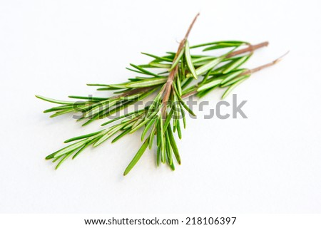 Fresh green Rosemary bound on the white background - stock photo
