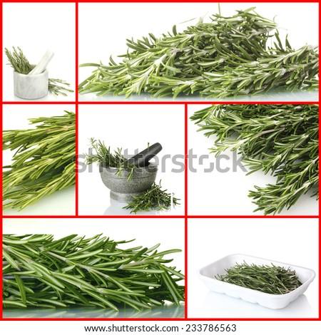 Fresh green rosemary collage - stock photo