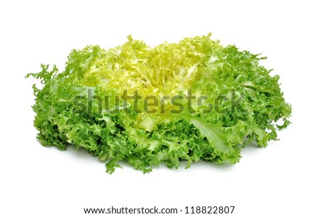 fresh green salad chicory isolated on white background - stock photo