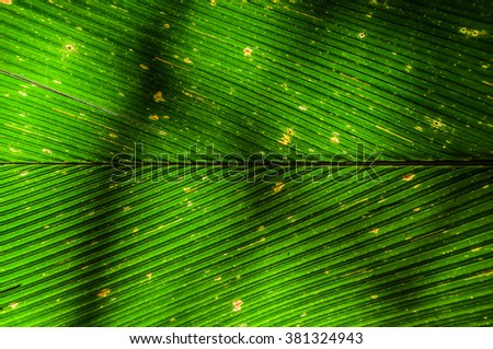 Fresh green tropical palm leaf close up surface texture image as background image - stock photo