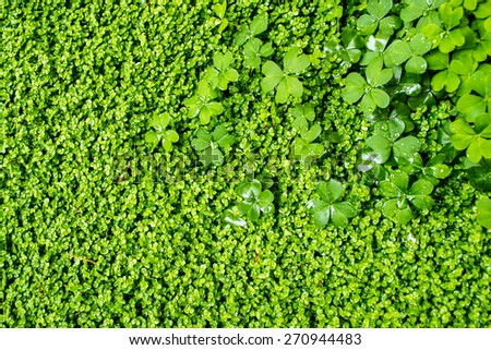 Fresh green vegetation covers the scene with water droplets - stock photo